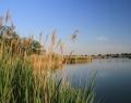 Béke / Homokbánya tó másik horgászlesről