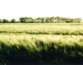 Tavaszi mező az Alföldön