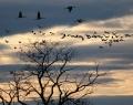 Fehértó: érkeznek a madarak