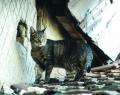 Fotózás: tanyasi macska