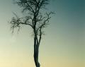 Fotózás: a puszta télen
