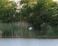 Béke / Homokbánya tó kócsaggal